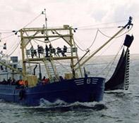 Garnalen vissen Texel